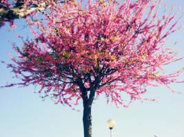 Blooming by NoFeelingLeftx