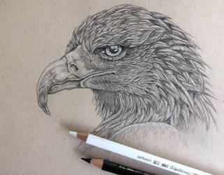 Eagle (study) by Assink-art