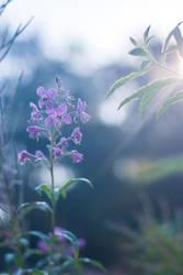 Morning flower by erynrandir