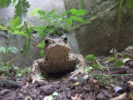 Toad by sonicboom1226