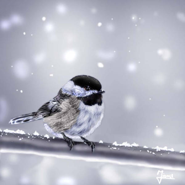 the little bird by blueboy777