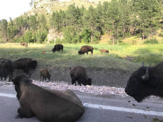 Buffalo Traffic Jam by Fire-Hawk9