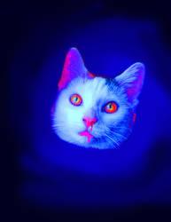 Kitty by shidoku