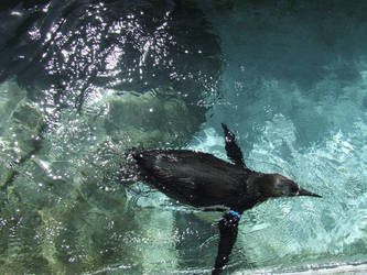 Swim by QueepyFreak