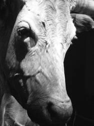 Cow by QueepyFreak