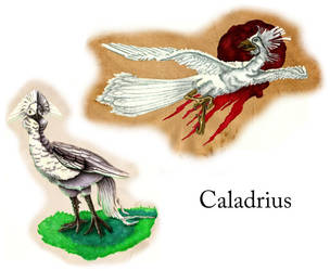 Caladrius by Sir-Pumpkinhead