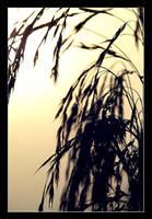 Reed my mind by taifun
