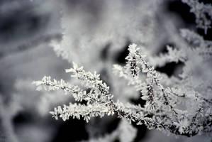 White by shimahi