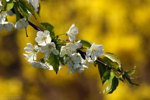 Wiosna, ach to Ty by shimahi
