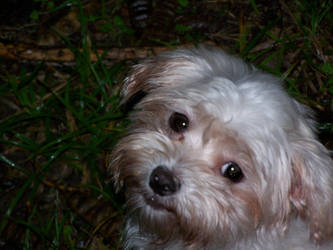 wistful molly by dauntiemagic