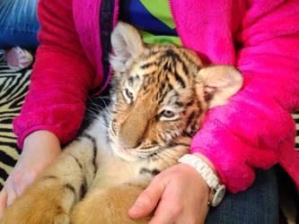 Tiger love by PatriciaRodelaArtist