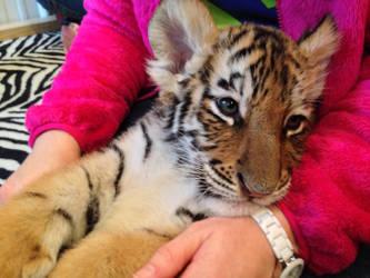 Tiger Cub by PatriciaRodelaArtist