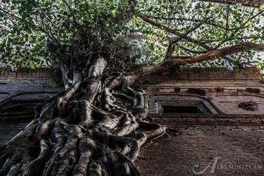 Tree by alkimh