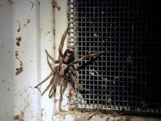 Along Came A Spider by talin4