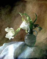 White tulips... by Luciuuu