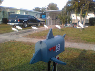 shark mailbox by TreborNehoc