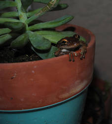 potted frog by TreborNehoc