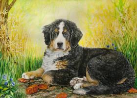 Bernese Mountain Dog by Haruinu