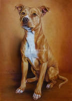 Dog portrait by Haruinu