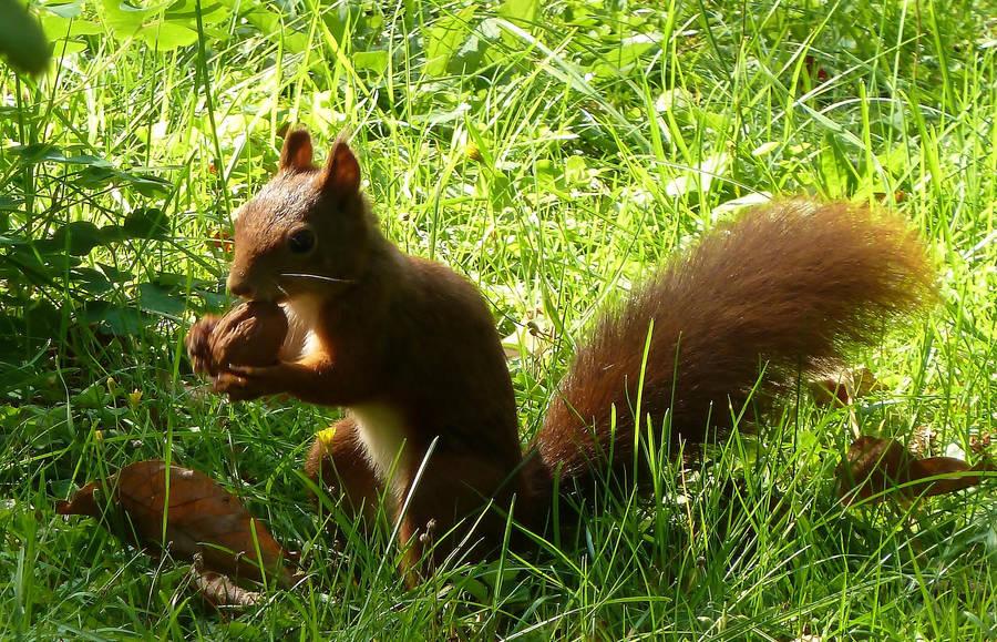 Hungry Squirrel by mockingbirdontree