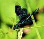 Wings Like an Angel by mockingbirdontree
