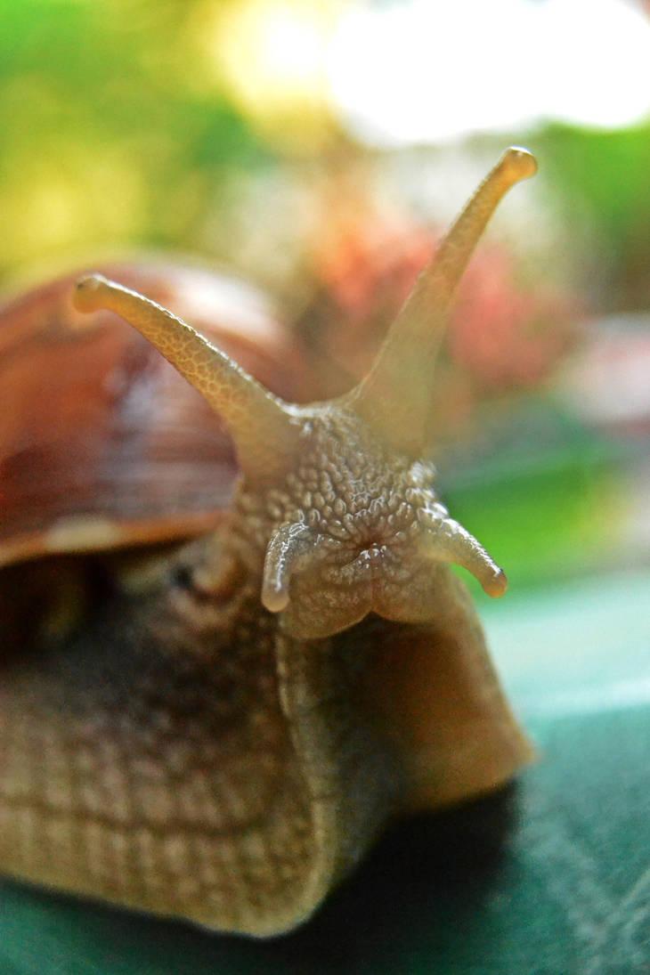 Snail kiss by SyllAndy