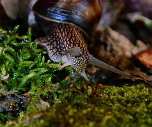 Snail adventure by SyllAndy