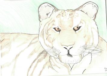 Amur (Siberian)Tigress by AltaikaTau