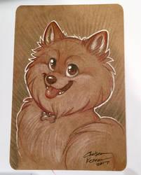 Pomeranian ECCC Sketch by autogatos