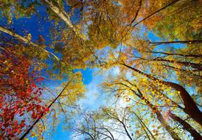Autumn Sky ll by deseonocturno