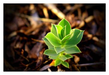 Unknown plant by malteschmidt