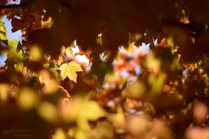 Autumn Light by VisualPoems