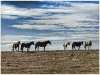 Winter Herd by Leannnorrisbond