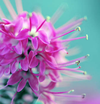 snippy floret by sumahli