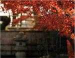 Red Beauty by jyoujo