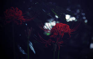 equinox day by jyoujo