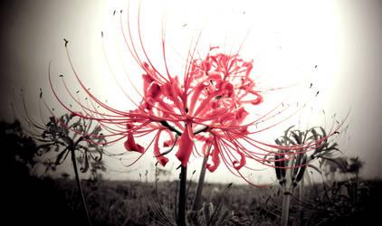 lotus sutra by jyoujo