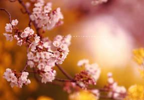 sakura sky by jyoujo
