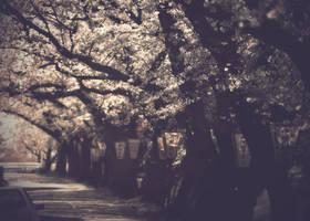 cherry silver street by jyoujo