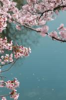 blooming seasons by jyoujo