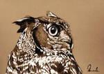 Owl by kleinmeli