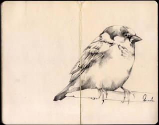 Sketchbook Bird by kleinmeli