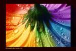 Colourful by kleinmeli