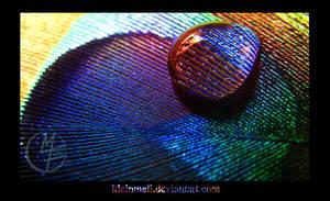 Macro Peacock I by kleinmeli