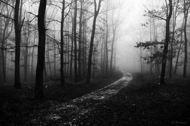 Misty Forest by PavelFireman