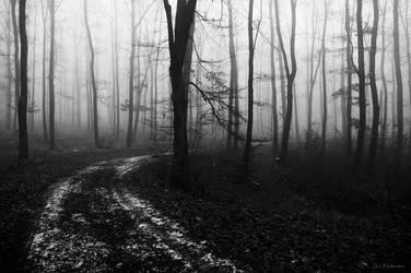Misty Forest pt.2 by PavelFireman