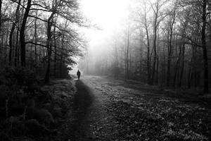 Light on the path by PavelFireman