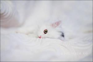 Cherchez le chat by WildRainOfIceAndFire