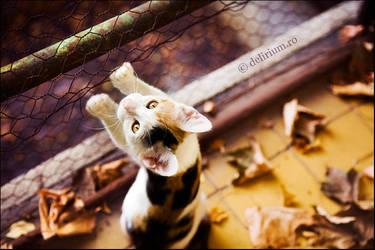 Autumn kitty by WildRainOfIceAndFire