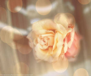 Soft roses by FrancescaDelfino